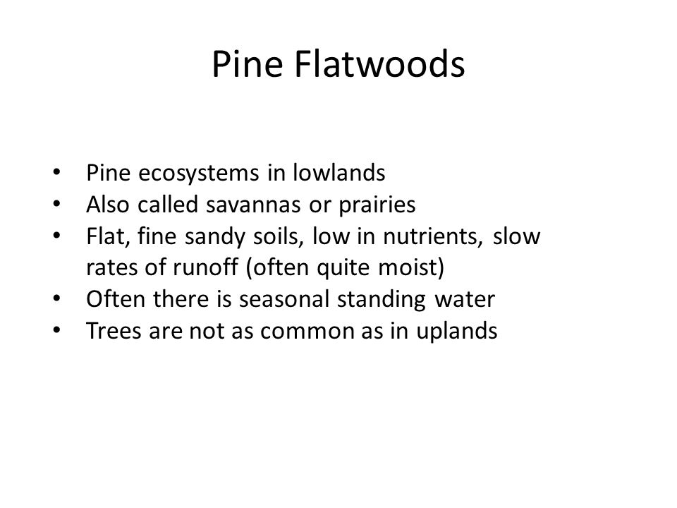 Pine Flatwoods Pine ecosystems in lowlands Also called savannas or prairies Flat, fine sandy soils, low in nutrients, slow rates of runoff (often quit