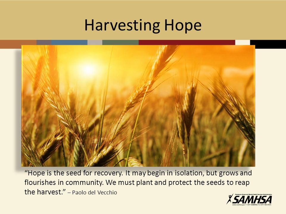 """Harvesting Hope """"Hope is the seed for recovery. It may begin in isolation, but grows and flourishes in community. We must plant and protect the seeds"""