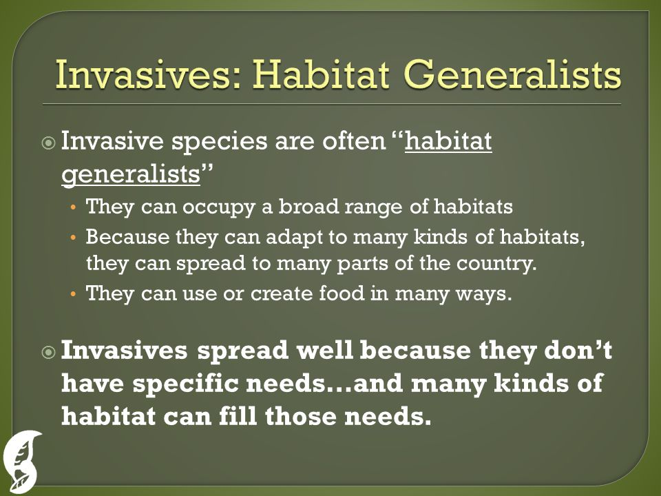  Invasive species are often habitat generalists They can occupy a broad range of habitats Because they can adapt to many kinds of habitats, they can spread to many parts of the country.