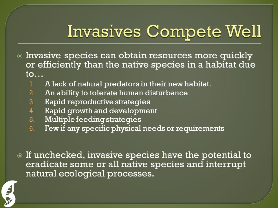  Invasive species can obtain resources more quickly or efficiently than the native species in a habitat due to… 1. A lack of natural predators in the
