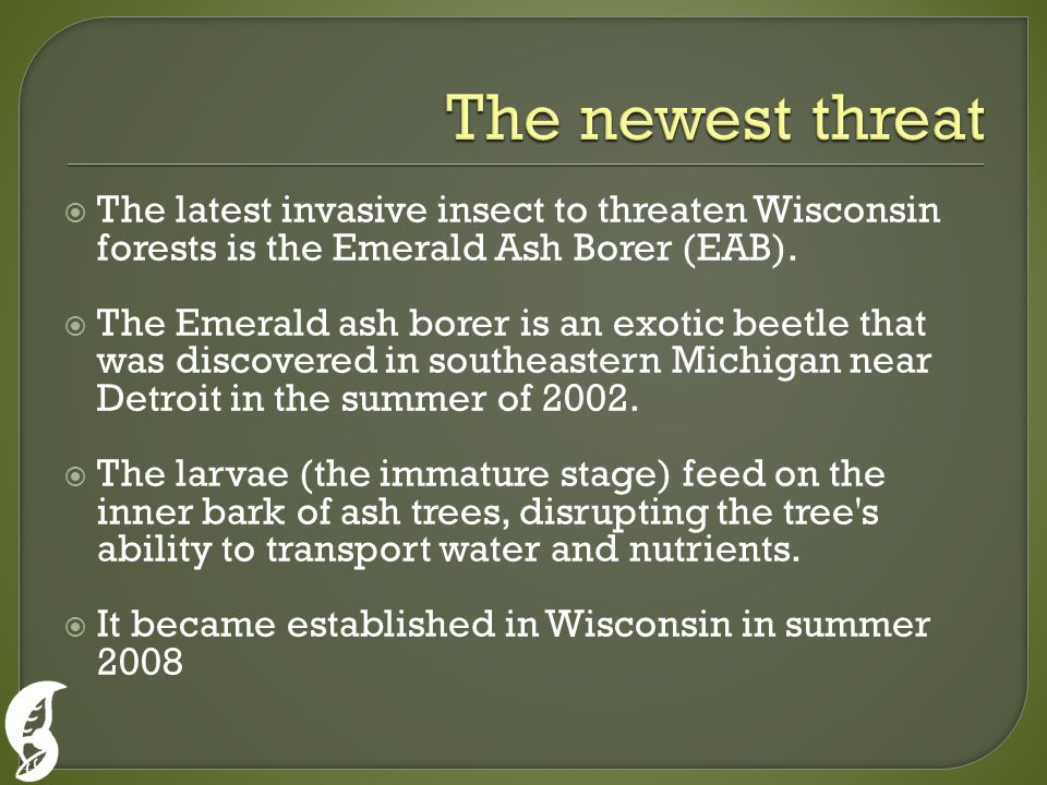  The latest invasive insect to threaten Wisconsin forests is the Emerald Ash Borer (EAB).
