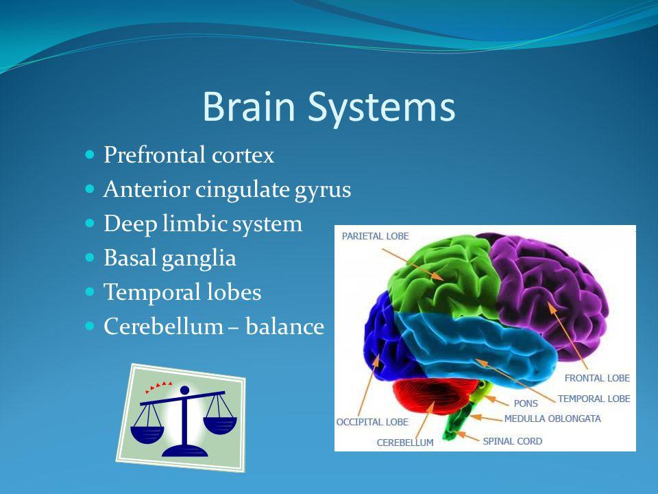 Brain Systems Prefrontal cortex Anterior cingulate gyrus Deep limbic system Basal ganglia Temporal lobes Cerebellum – balance