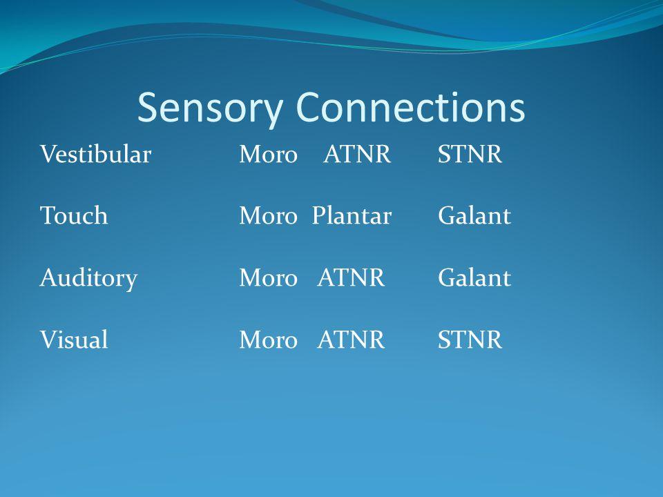Sensory Connections VestibularMoro ATNRSTNR TouchMoro PlantarGalant AuditoryMoro ATNRGalant VisualMoro ATNRSTNR