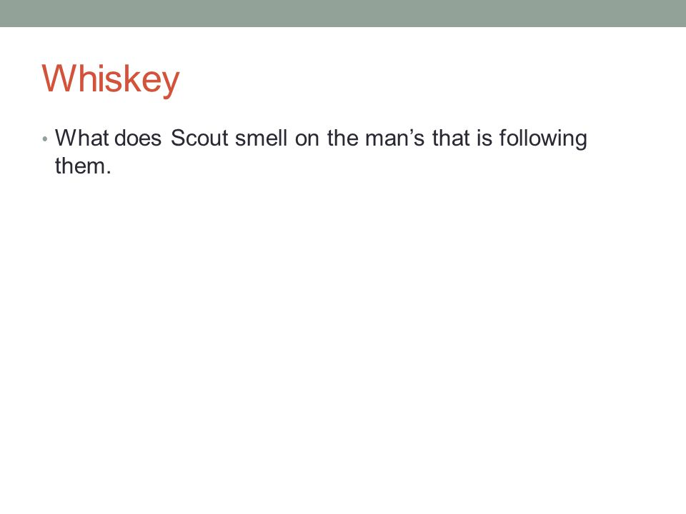 Whiskey What does Scout smell on the man's that is following them.