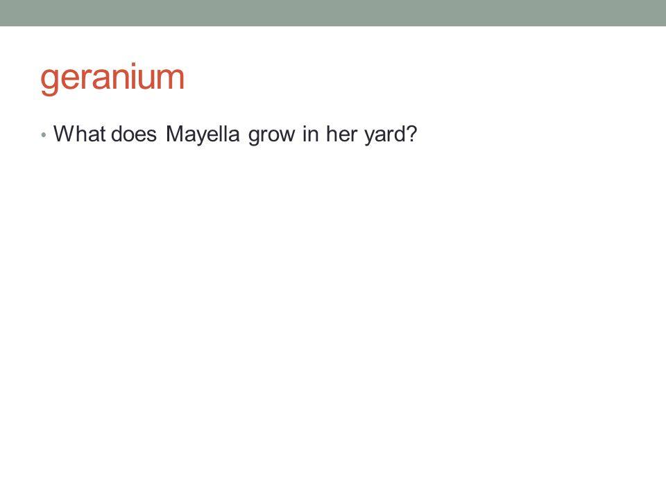 geranium What does Mayella grow in her yard?