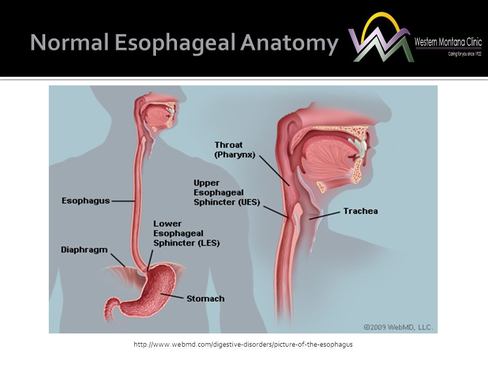http://www.webmd.com/digestive-disorders/picture-of-the-esophagus