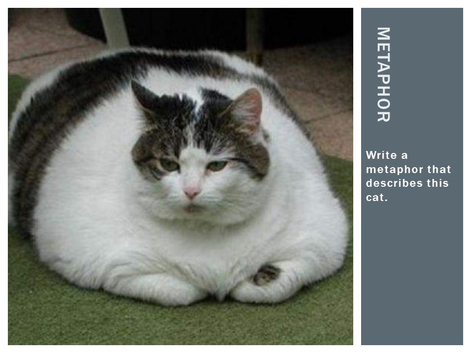 Write a metaphor that describes this cat. METAPHOR