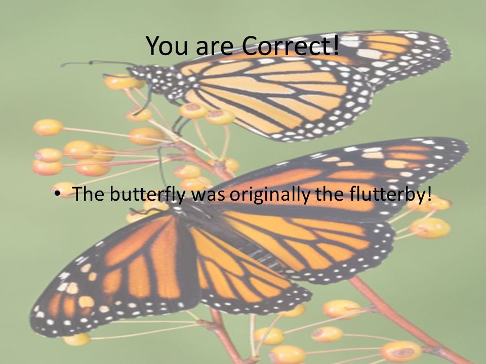 You are Correct! The butterfly was originally the flutterby!