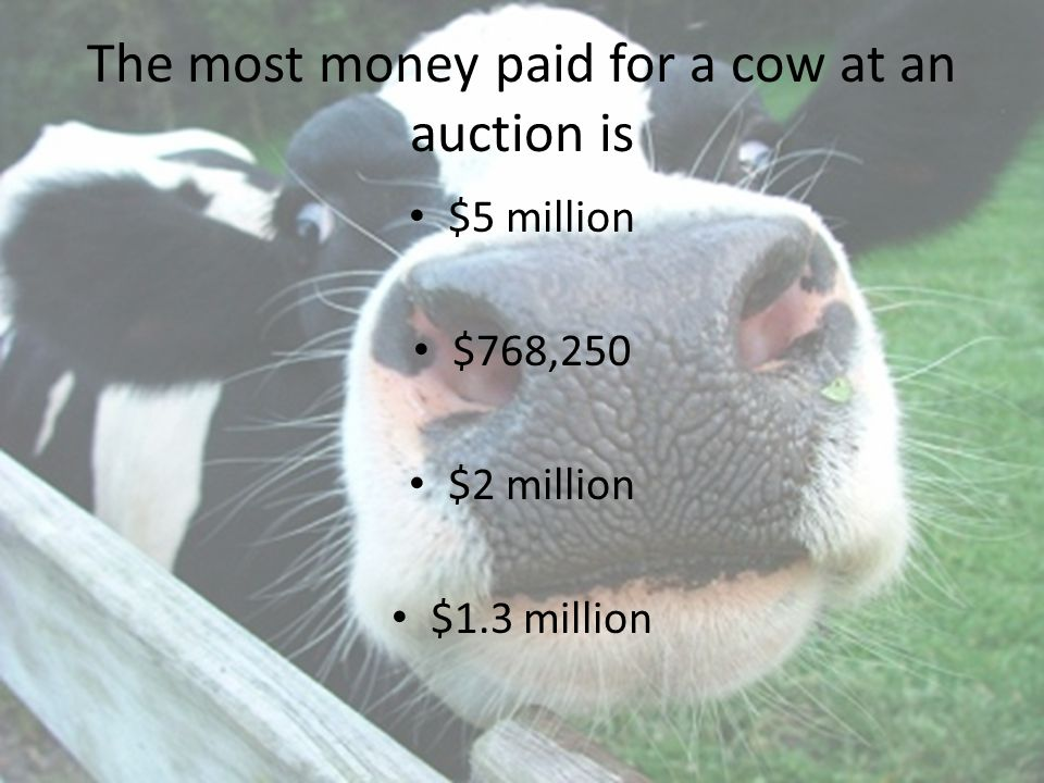 The most money paid for a cow at an auction is $5 million $768,250 $2 million $1.3 million