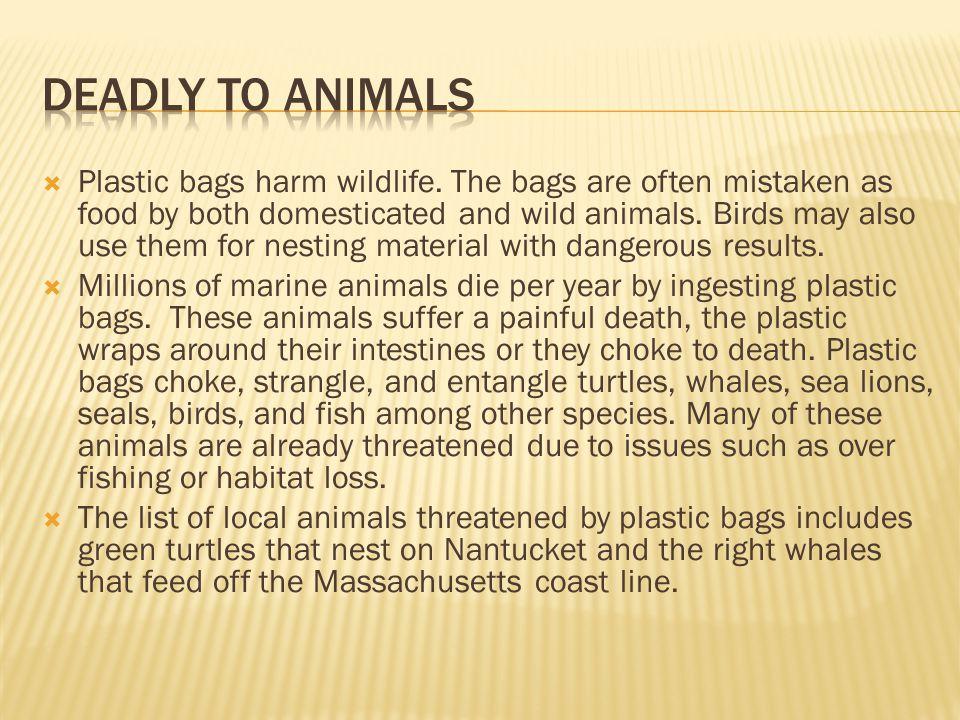  Plastic bags harm wildlife.