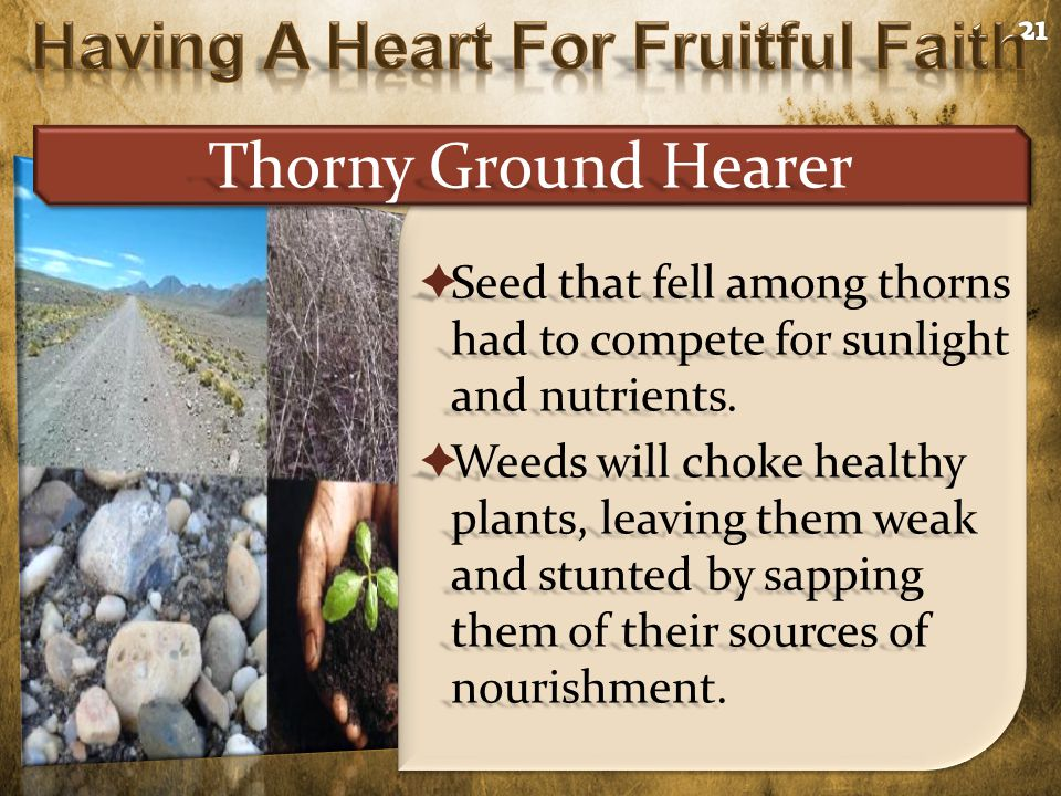  Seed that fell among thorns had to compete for sunlight and nutrients.  Weeds will choke healthy plants, leaving them weak and stunted by sapping t