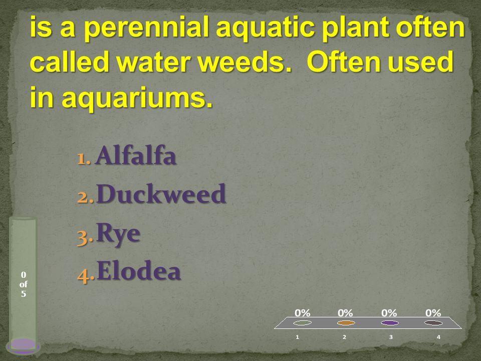 0 of 5 1. Alfalfa 2. Duckweed 3. Rye 4. Elodea