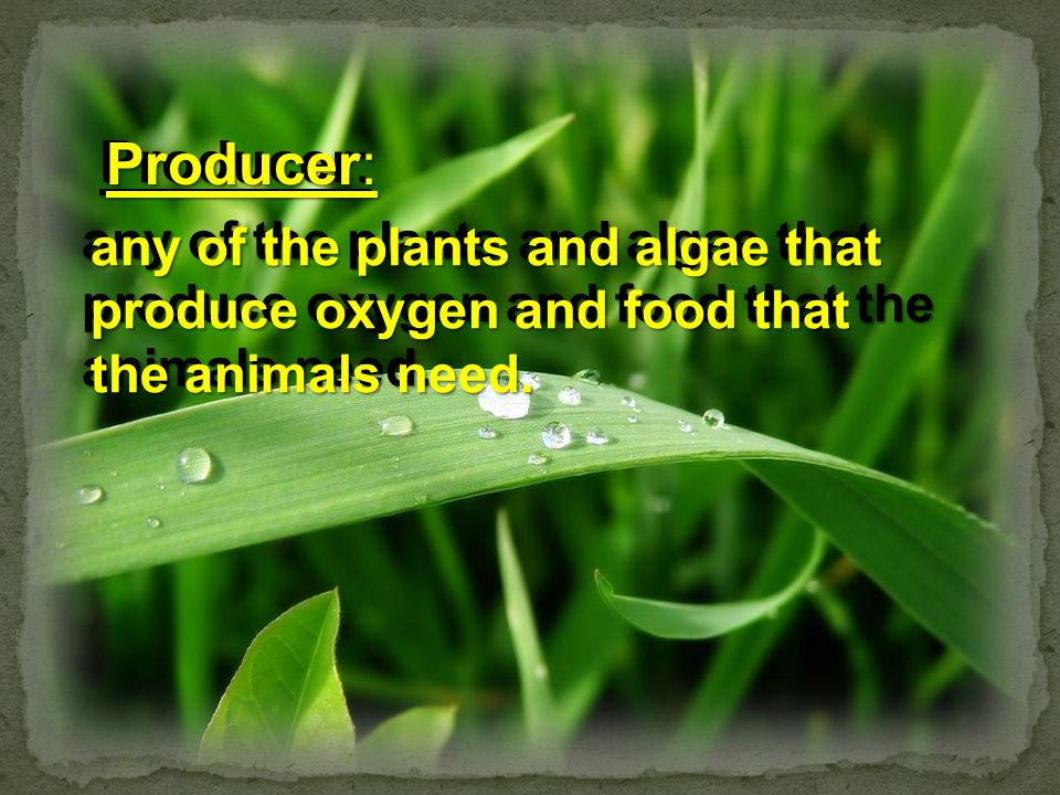 Producer: any of the plants and algae that produce oxygen and food that the animals need. Producer: