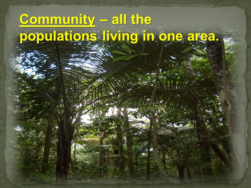 Community – all the populations living in one area.
