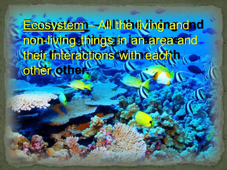 Ecosystem – All the living and non-living things in an area and their interactions with each other.