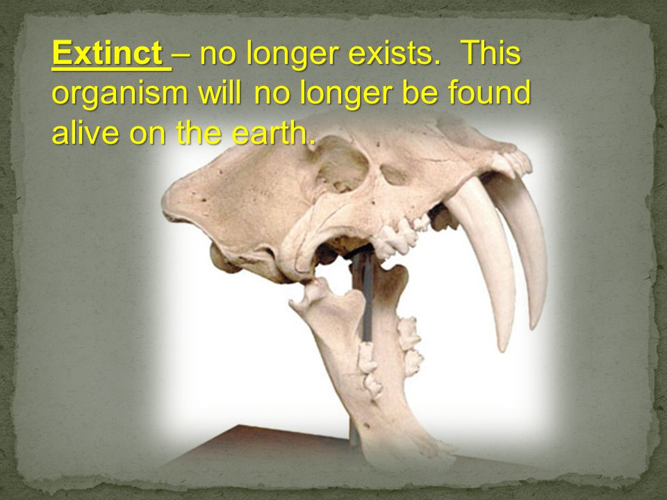 Extinct – no longer exists. This organism will no longer be found alive on the earth.
