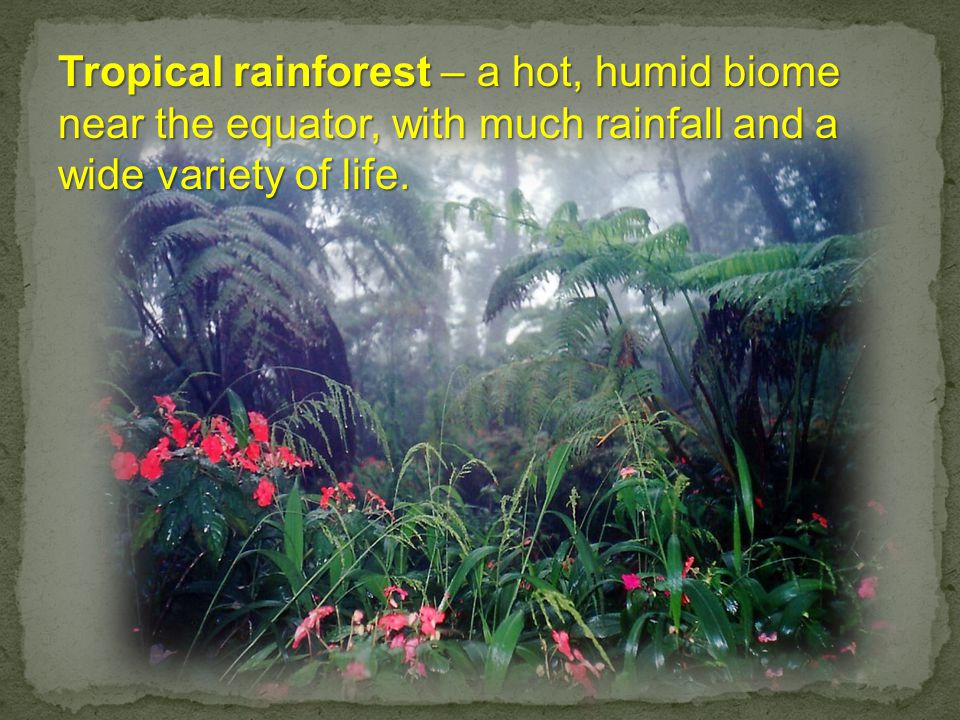 Tropical rainforest – a hot, humid biome near the equator, with much rainfall and a wide variety of life.
