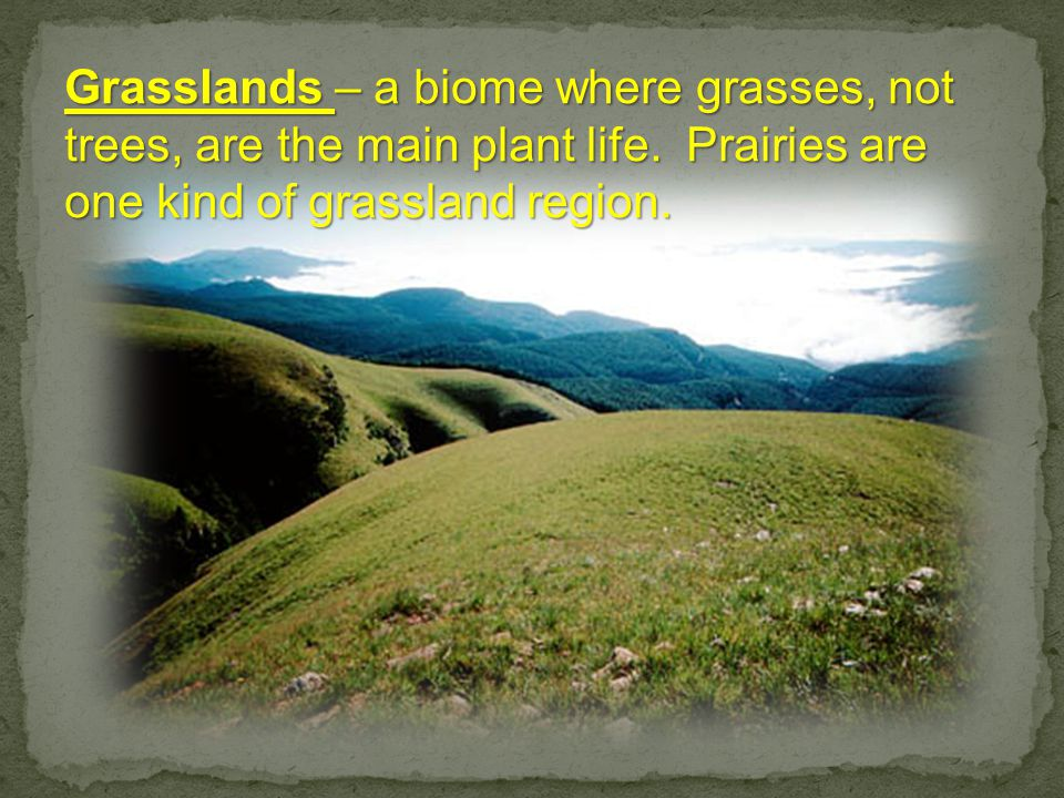 Grasslands – a biome where grasses, not trees, are the main plant life.