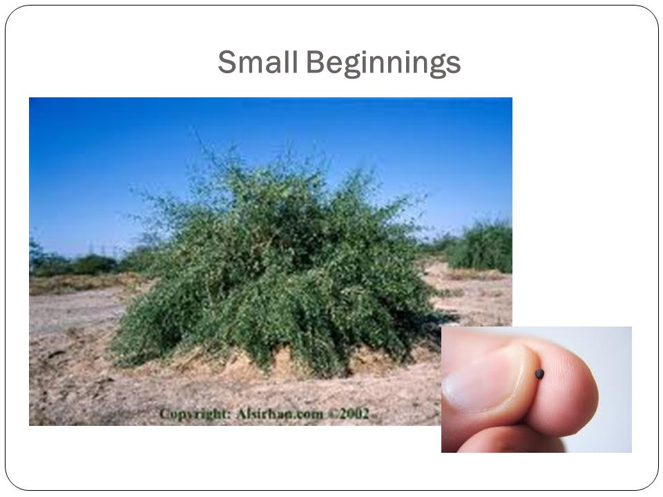 Conclusion Beginnings are usually small.Growth involves faith.