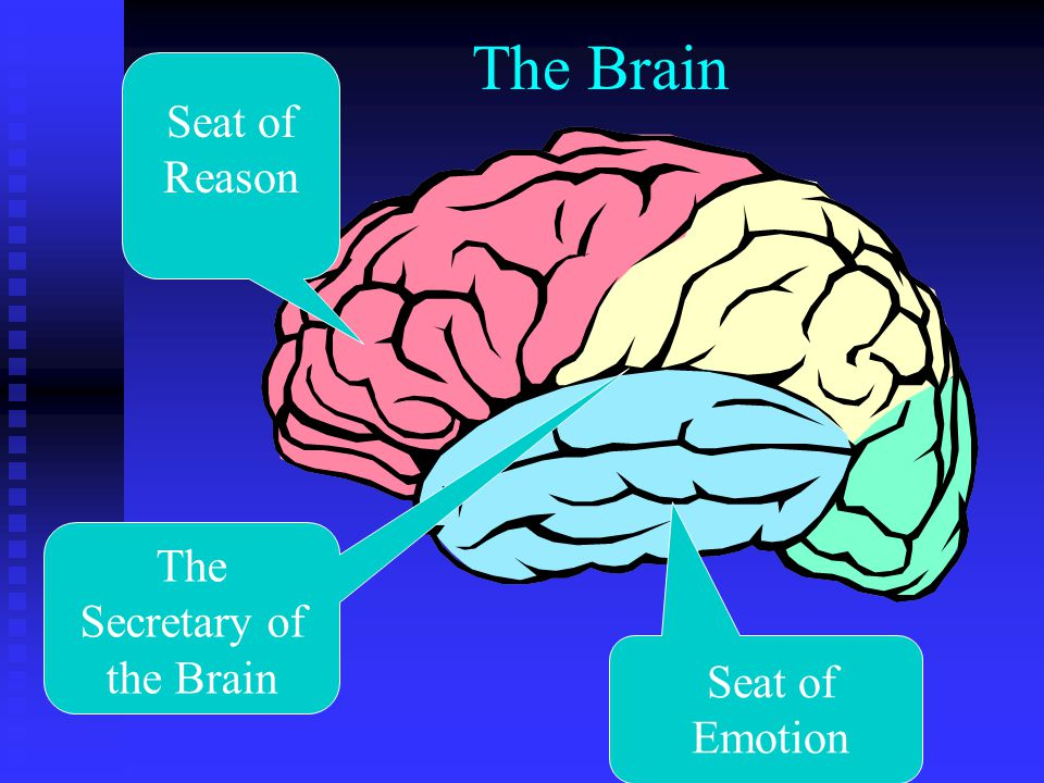 The Brain Seat of Reason Seat of Emotion The Secretary of the Brain
