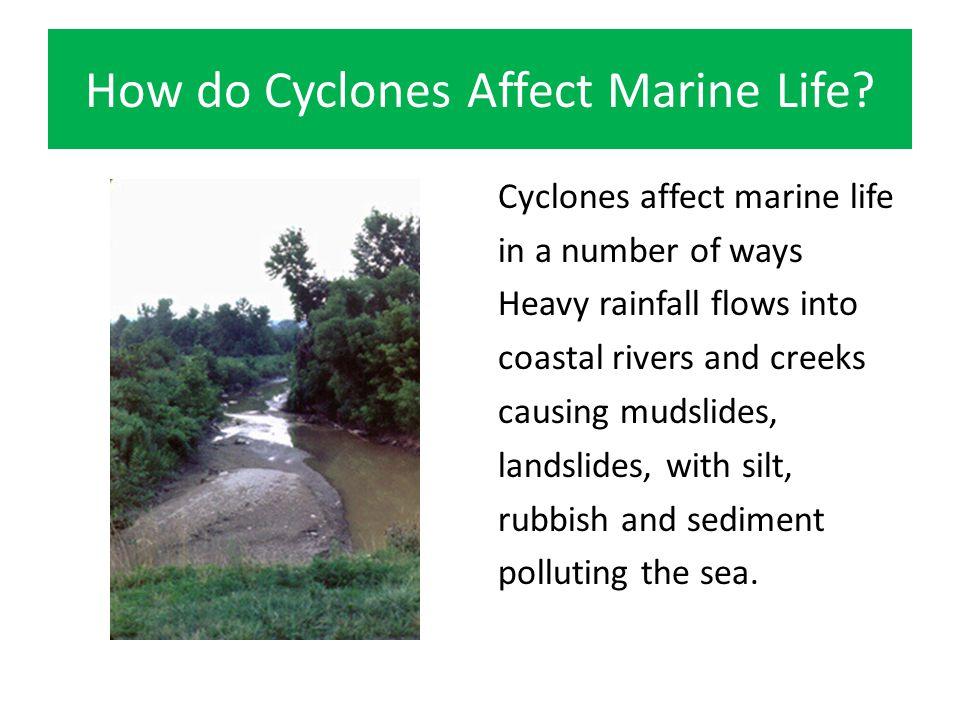 How do Cyclones Affect Marine Life.