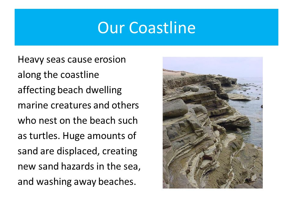 Our Coastline Heavy seas cause erosion along the coastline affecting beach dwelling marine creatures and others who nest on the beach such as turtles.