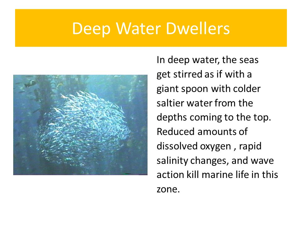 Deep Water Dwellers In deep water, the seas get stirred as if with a giant spoon with colder saltier water from the depths coming to the top.