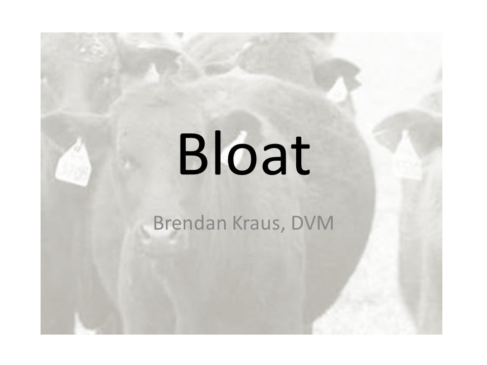 Bloat Brendan Kraus, DVM