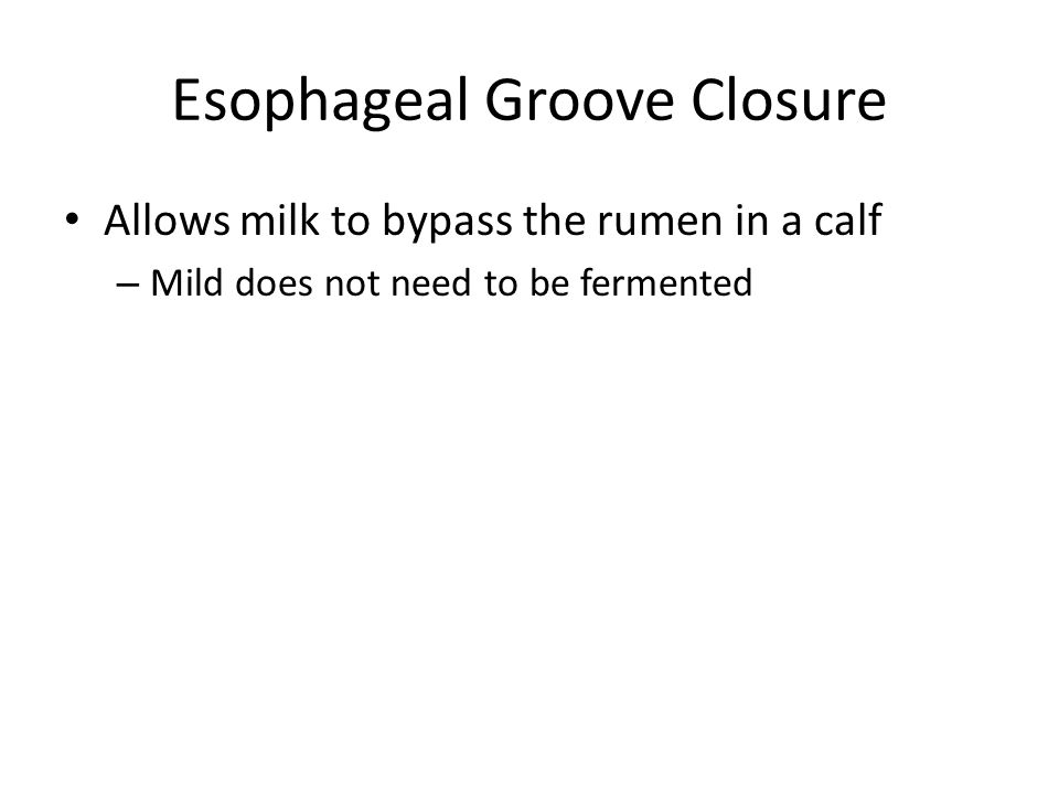 Esophageal Groove Closure Allows milk to bypass the rumen in a calf – Mild does not need to be fermented