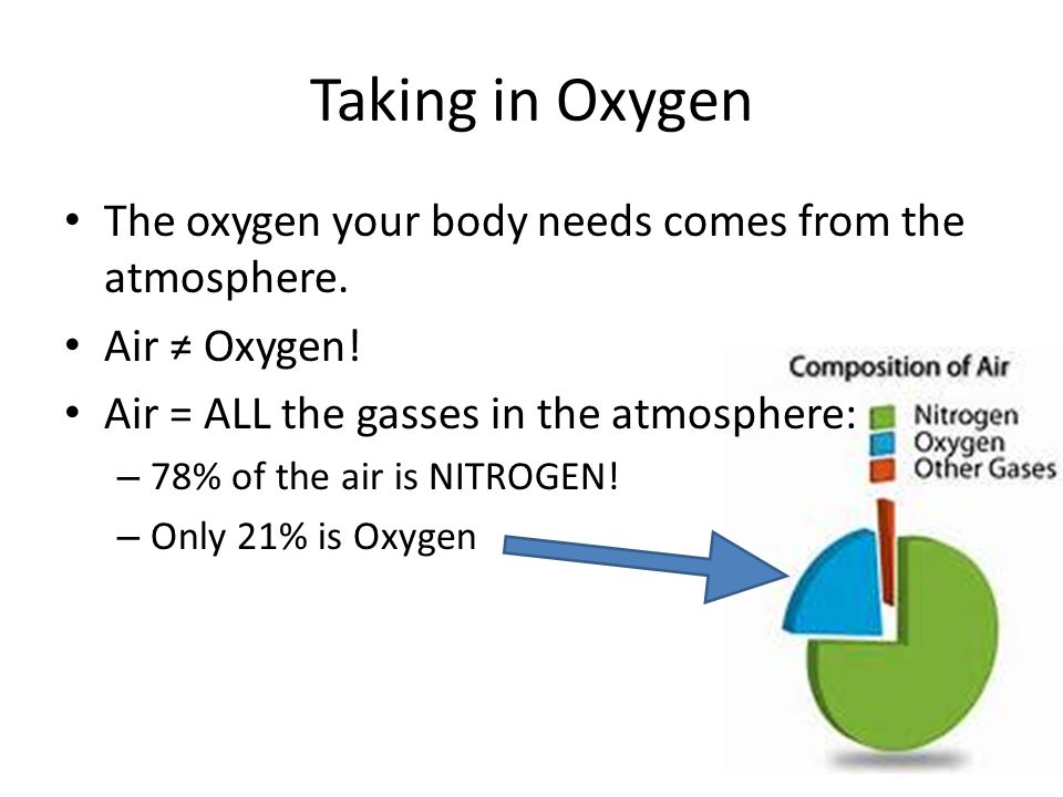 Taking in Oxygen The oxygen your body needs comes from the atmosphere. Air ≠ Oxygen! Air = ALL the gasses in the atmosphere: – 78% of the air is NITRO