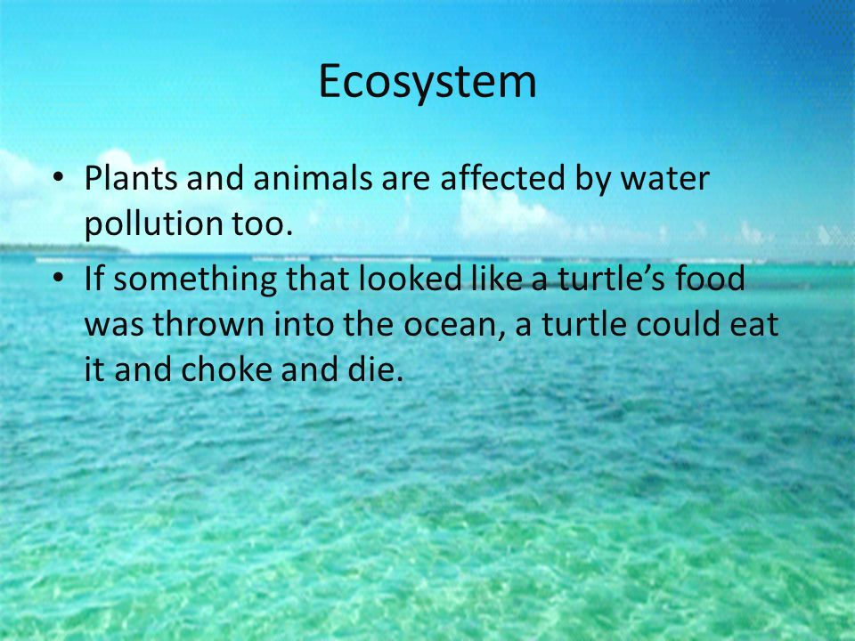 Ecosystem Plants and animals are affected by water pollution too.