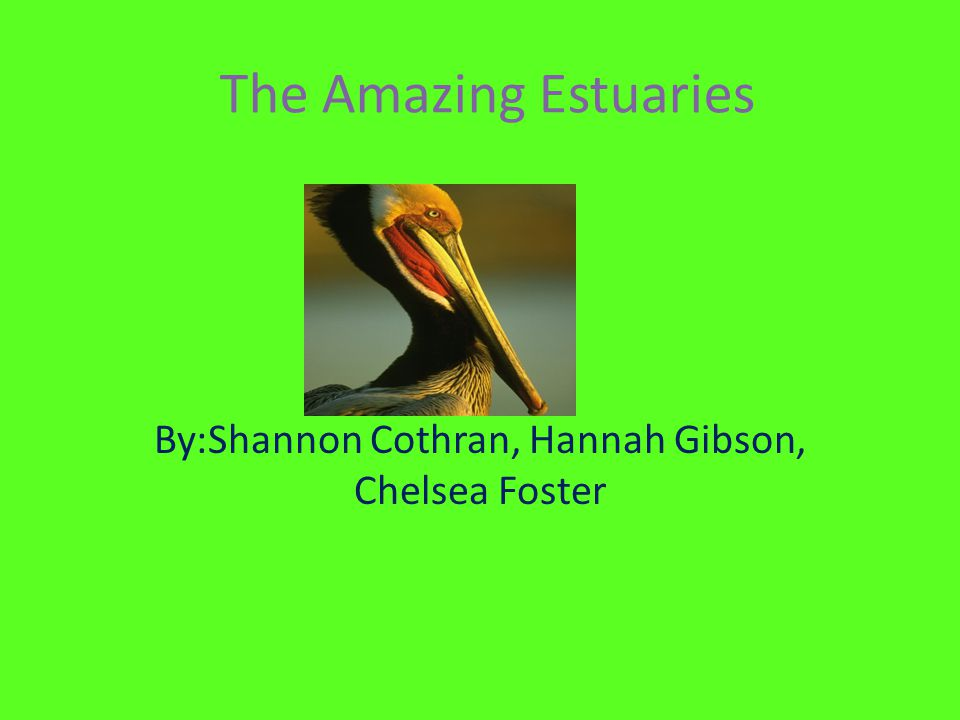 The Amazing Estuaries By:Shannon Cothran, Hannah Gibson, Chelsea Foster