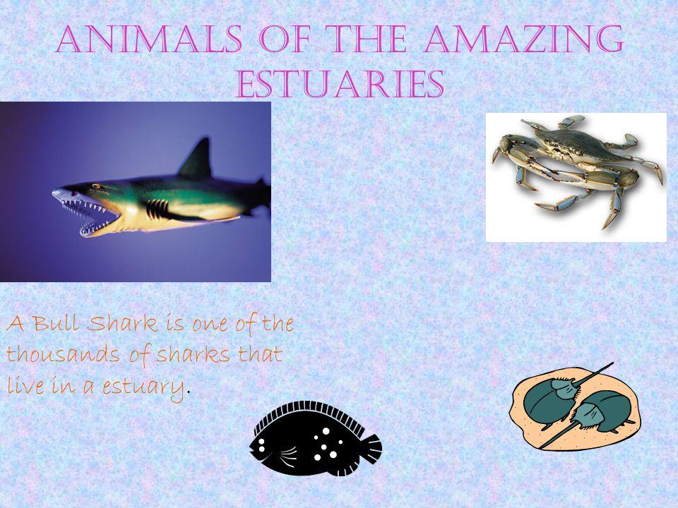 Food Chain Eel grasskrill
