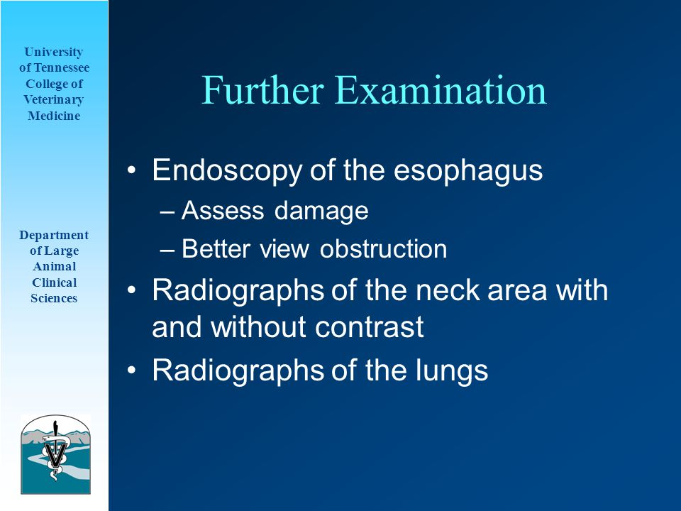 University of Tennessee College of Veterinary Medicine Department of Large Animal Clinical Sciences Further Examination Endoscopy of the esophagus –Assess damage –Better view obstruction Radiographs of the neck area with and without contrast Radiographs of the lungs