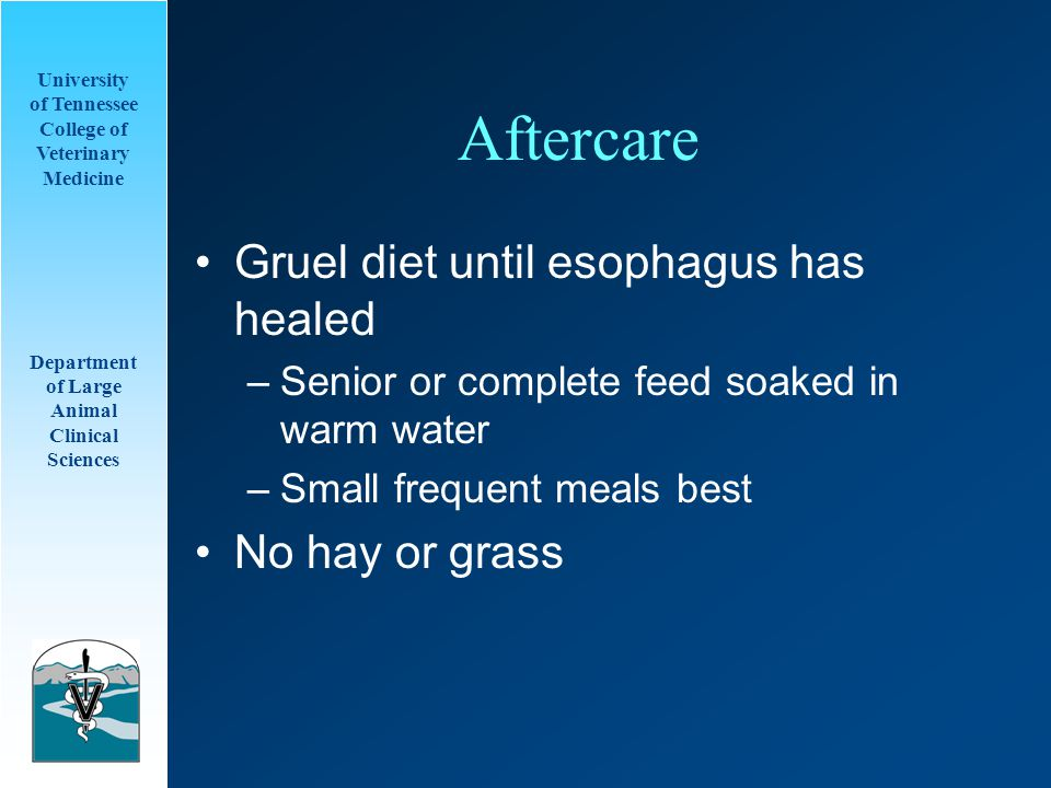 University of Tennessee College of Veterinary Medicine Department of Large Animal Clinical Sciences Aftercare Gruel diet until esophagus has healed –Senior or complete feed soaked in warm water –Small frequent meals best No hay or grass