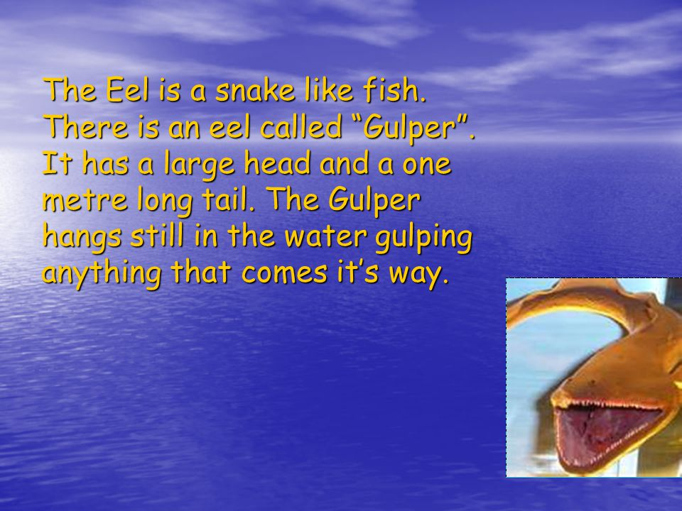 The Eel is a snake like fish.There is an eel called Gulper .