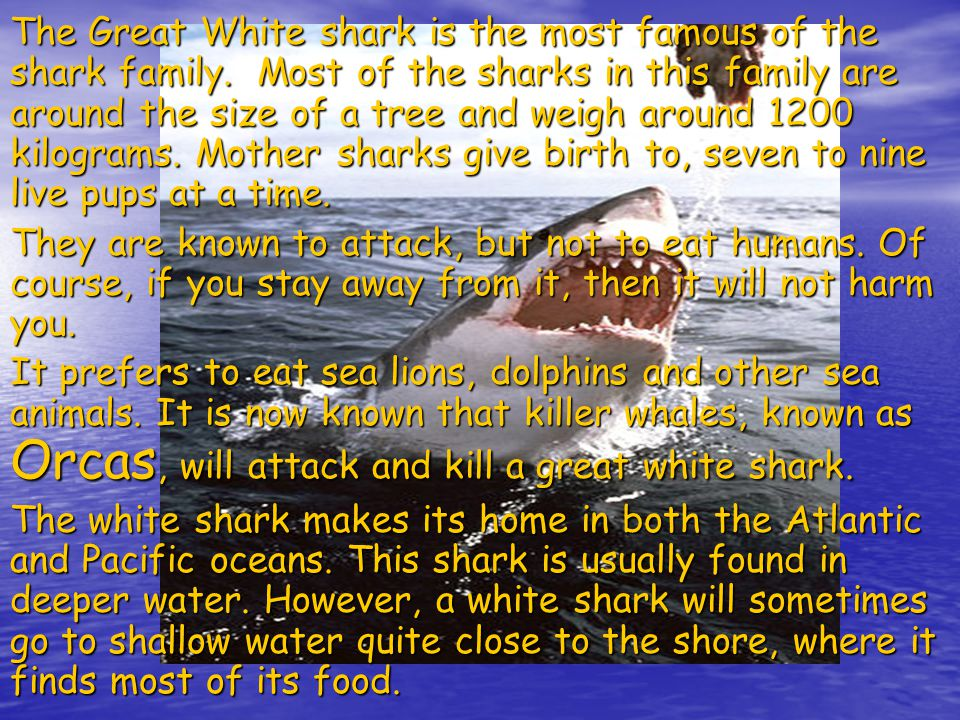The Great White shark is the most famous of the shark family.