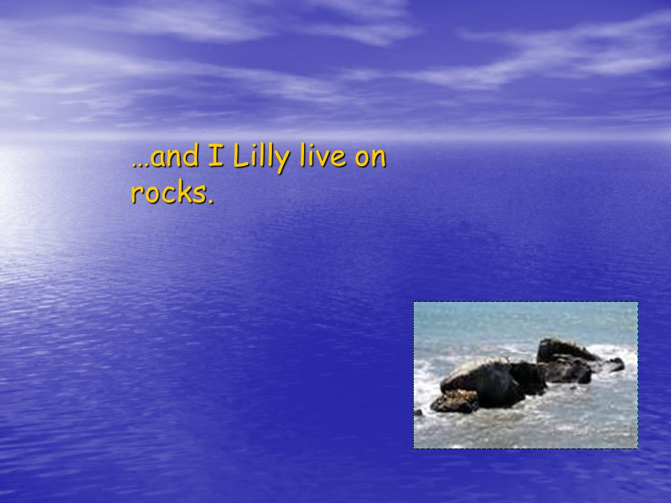 …and I Lilly live on rocks.
