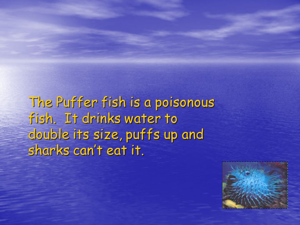 The Puffer fish is a poisonous fish.