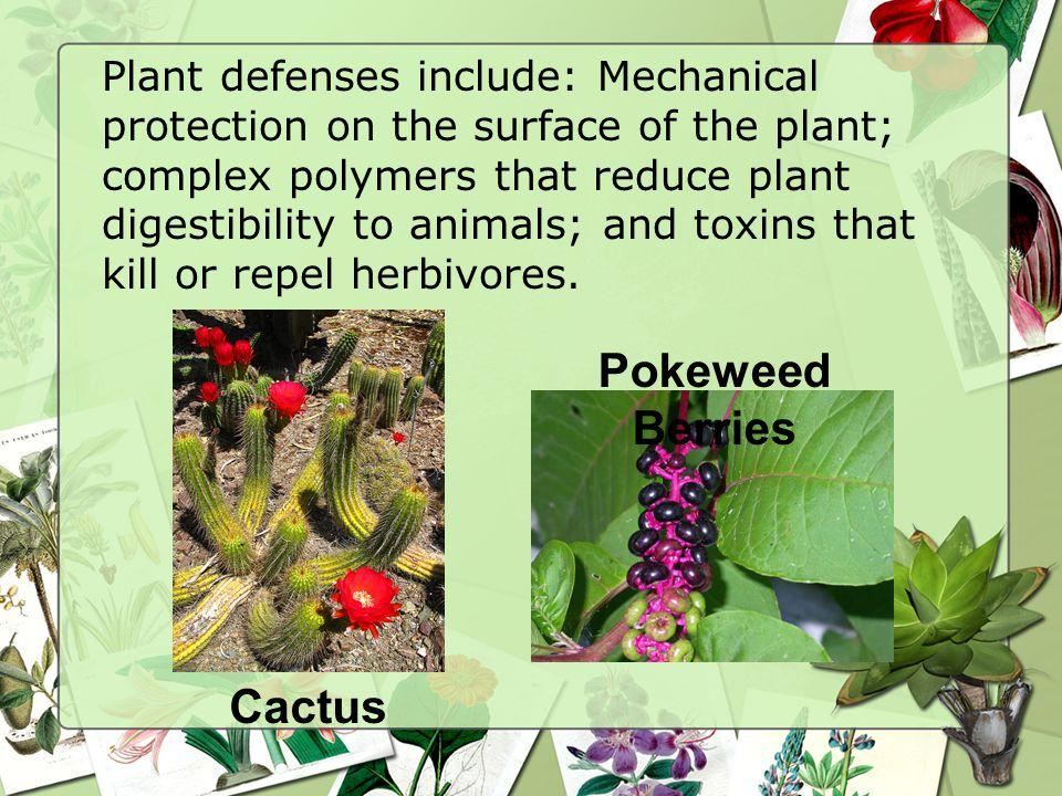 Plant defenses include: Mechanical protection on the surface of the plant; complex polymers that reduce plant digestibility to animals; and toxins that kill or repel herbivores.