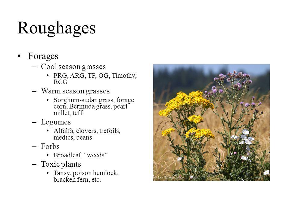 Roughages Forages – Cool season grasses PRG, ARG, TF, OG, Timothy, RCG – Warm season grasses Sorghum-sudan grass, forage corn, Bermuda grass, pearl mi