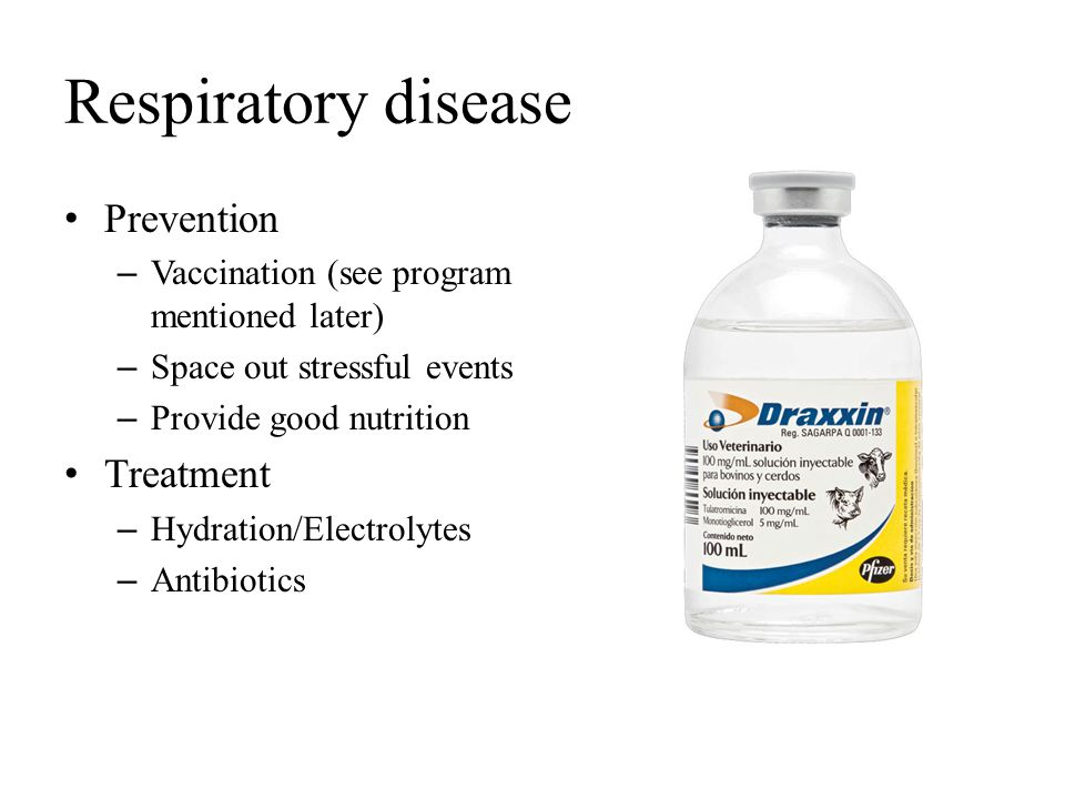 Respiratory disease Prevention – Vaccination (see program mentioned later) – Space out stressful events – Provide good nutrition Treatment – Hydration