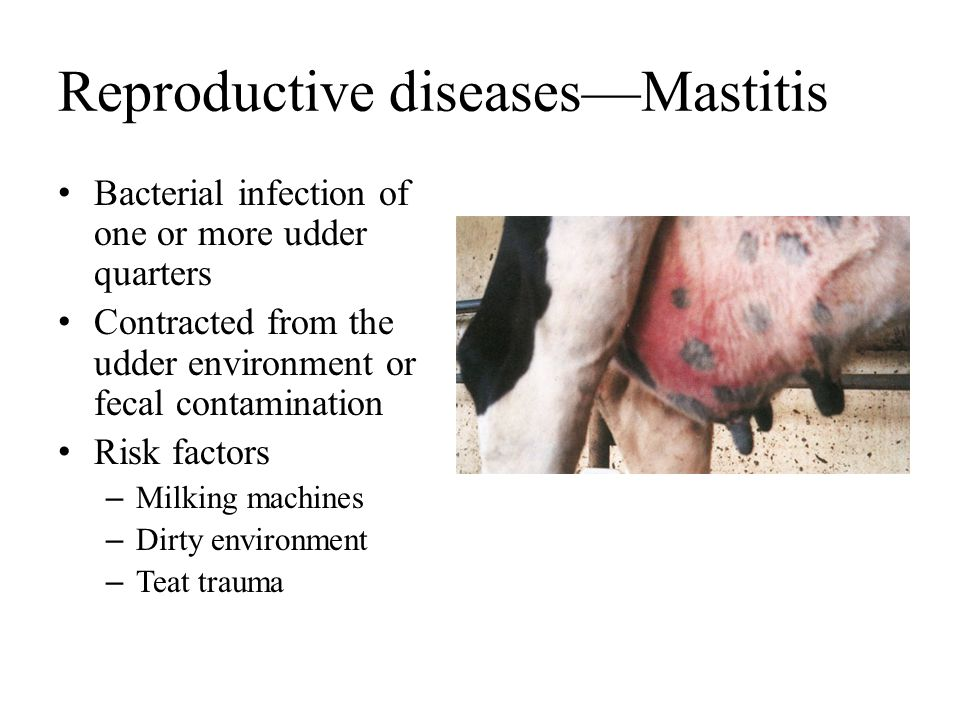 Reproductive diseases—Mastitis Bacterial infection of one or more udder quarters Contracted from the udder environment or fecal contamination Risk fac