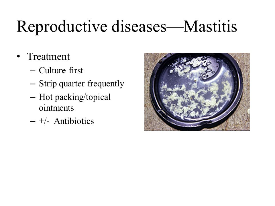 Reproductive diseases—Mastitis Treatment – Culture first – Strip quarter frequently – Hot packing/topical ointments – +/- Antibiotics