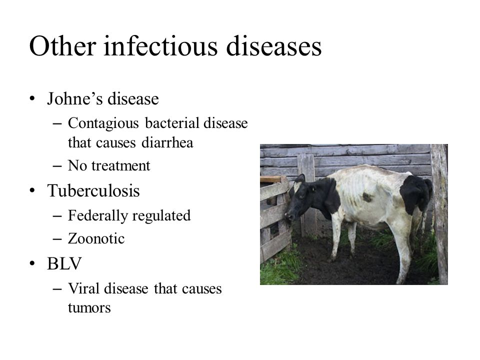 Other infectious diseases Johne's disease – Contagious bacterial disease that causes diarrhea – No treatment Tuberculosis – Federally regulated – Zoon