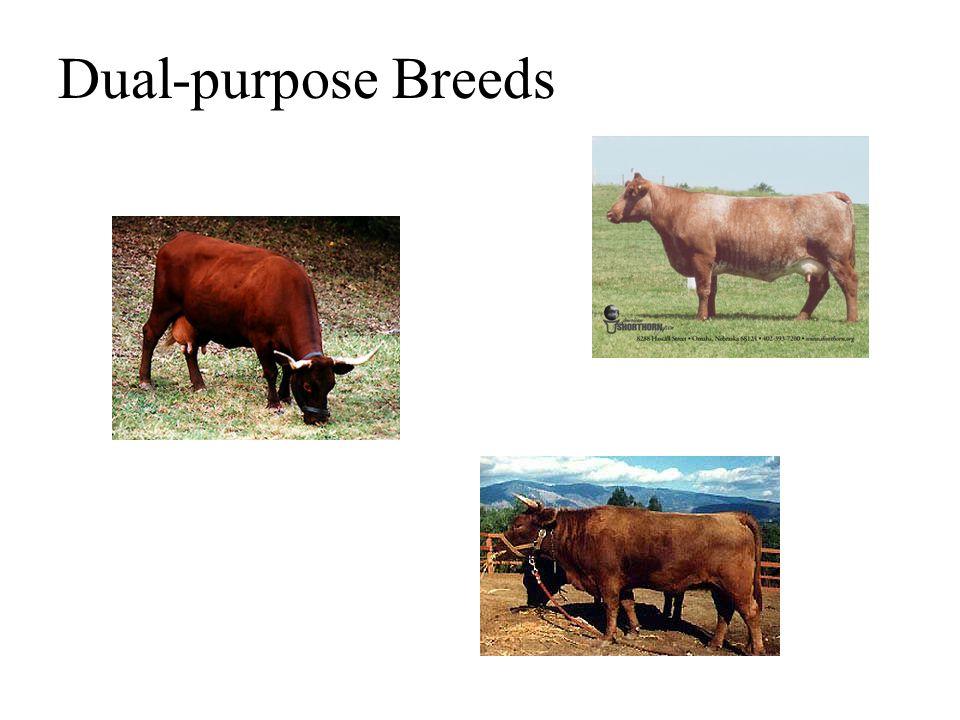Dual-purpose Breeds