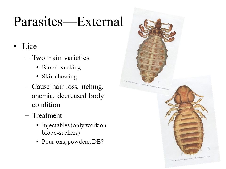 Parasites—External Lice – Two main varieties Blood–sucking Skin chewing – Cause hair loss, itching, anemia, decreased body condition – Treatment Injec