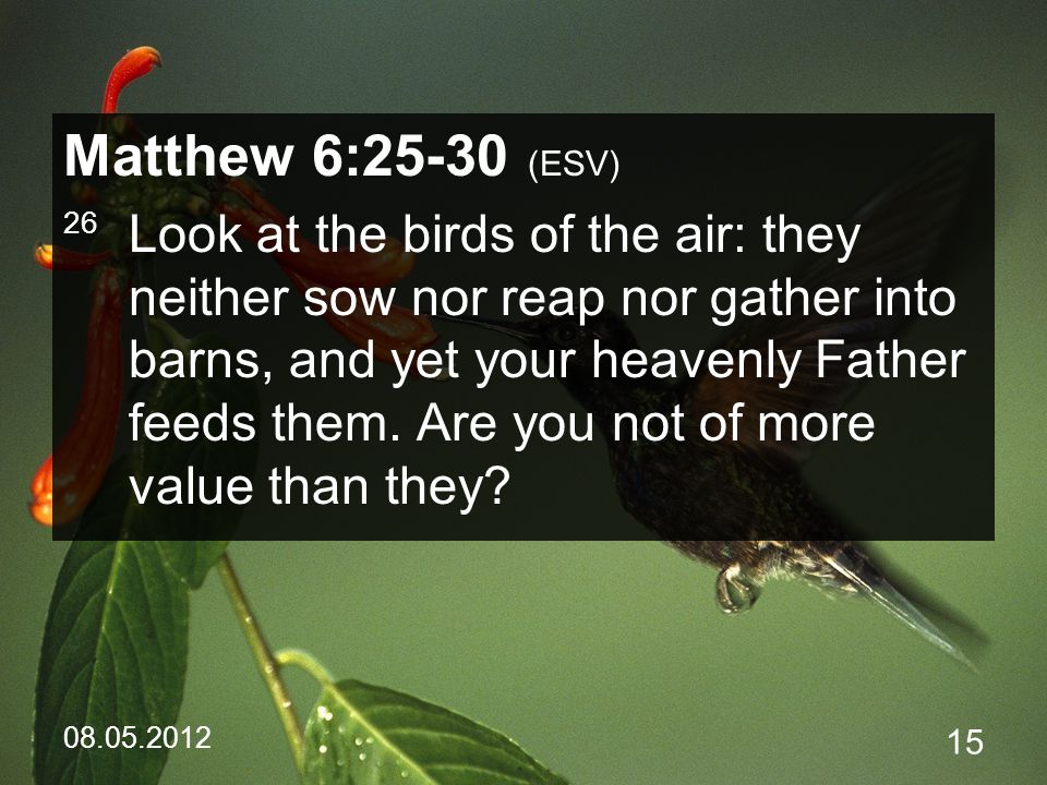 08.05.2012 15 Matthew 6:25-30 (ESV) 26 Look at the birds of the air: they neither sow nor reap nor gather into barns, and yet your heavenly Father feeds them.