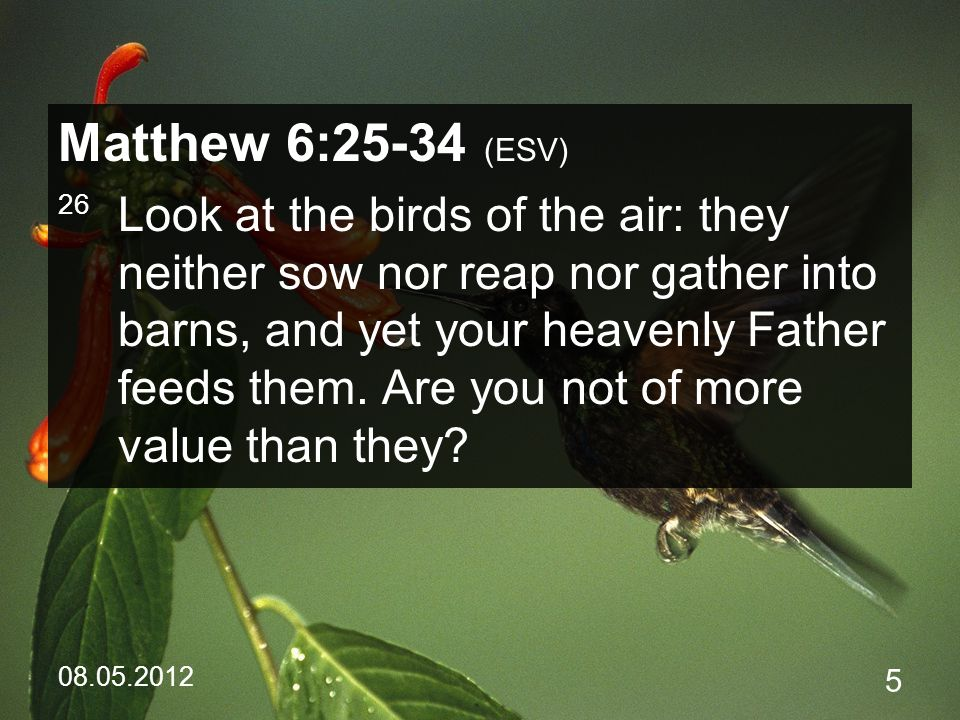 08.05.2012 5 Matthew 6:25-34 (ESV) 26 Look at the birds of the air: they neither sow nor reap nor gather into barns, and yet your heavenly Father feeds them.