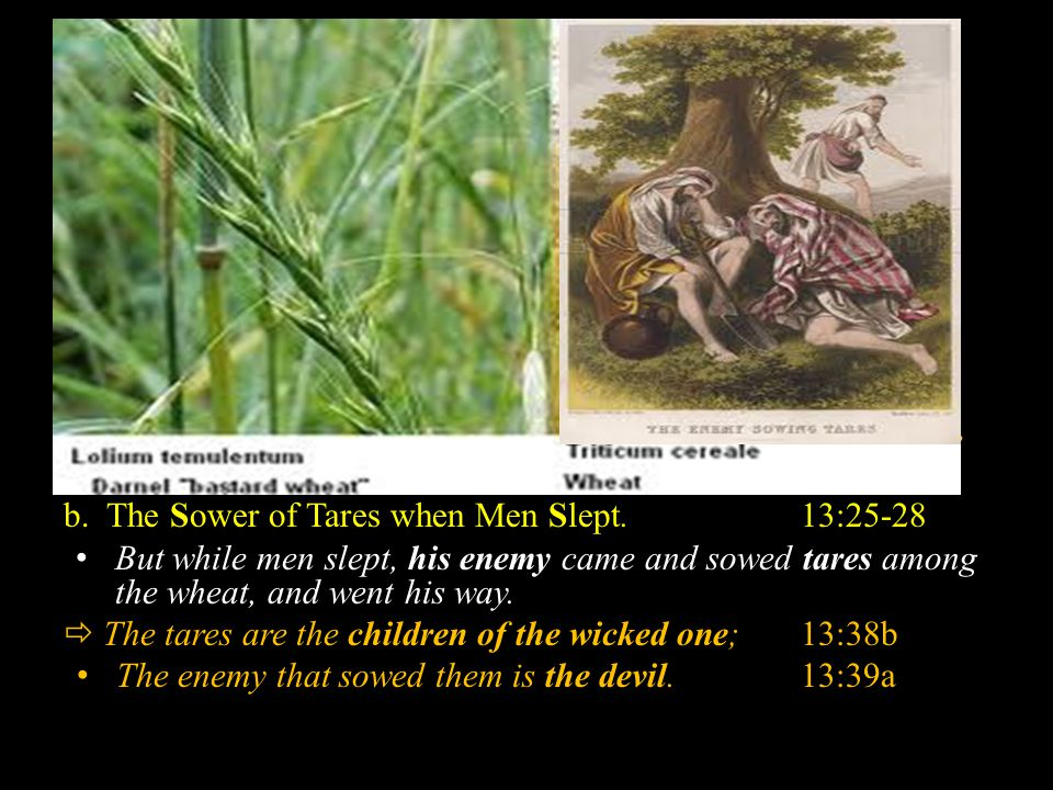 B. T HE P ARABLE OF THE T ARES AND THE W HEAT. Mt. 13:36-43 The Introduction of the Parable:Mt. 13:38, 30 2. The Illustration in and Interpretation of